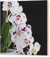 Orchid Phalaenopsis White Flower Wood Print
