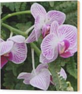 Orchid Pink Wood Print
