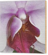 Orchid Portrait In Craquelure Wood Print