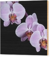 Pink Orchid I Wood Print