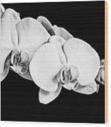 Orchid - Bw Wood Print