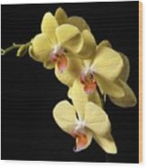 Orchid Set Against Black. Wood Print
