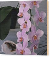 Orchid Splendor Wood Print