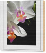Orchid Spring Poster Wood Print