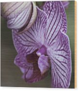 Orchid Strips Wood Print