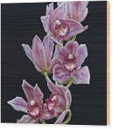 Orchid Study 1 Wood Print