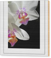 Orchid Underneath Poster Wood Print