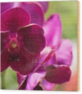 Orchid Vanda Ratchaburi Waxy Red Wood Print