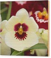 Orchid Vii Wood Print