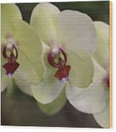 Orchid White Trio Wood Print