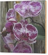 Orchid With Purple Patches Wood Print