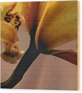 Orchid Yellow Wood Print