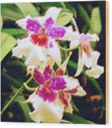 Orchids 1 Wood Print