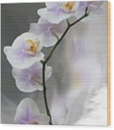 Orchids 2010 Wood Print
