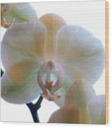 Orchids 3 Wood Print by Mike McGlothlen
