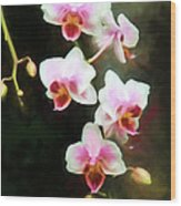 Orchids Abound Wood Print