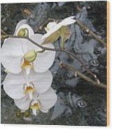 Orchids And Water Wood Print