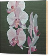 Orchids For Didi Wood Print