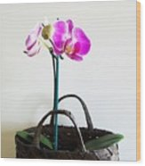 Orchids In A Basket Wood Print