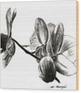 Orchids In Black Wood Print
