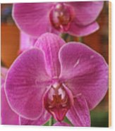 Orchids In Bloom Wood Print