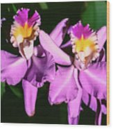 Orchids In Costa Rica Wood Print