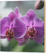 Orchids In Flight Wood Print
