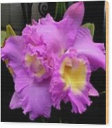 Orchids In Fuchsia  Wood Print