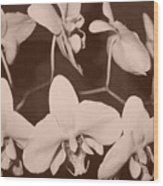 Orchids In Sepia Wood Print