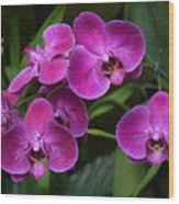 Orchids In Vivid Pink  Wood Print