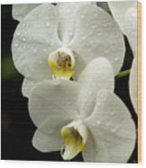 Orchids Kauai Wood Print