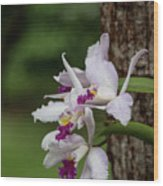 Orchids On A Tree Wood Print