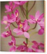 Orchids On Stem Wood Print