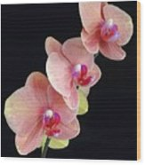 Orchids Reach For The Rainbow Wood Print