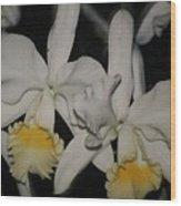 Orchids Satin Wood Print