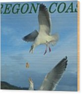 Oregon Coast Amazing Seagulls Wood Print