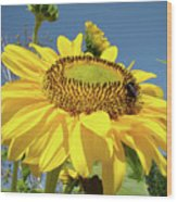 Oregon Gardens Silverton Sunflower Honeybee Baslee  Wood Print