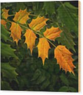 Oregon Grape Autumn Wood Print
