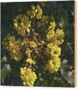 Oregon Grape Flowers Wood Print