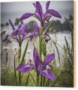 Oregon Iris At The Beach Wood Print