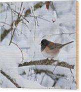 Oregon Junko In Snow Wood Print