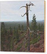 Oregon Landscape - Confused Tree At Lava Butte Wood Print