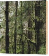 Oregon Old Growth Coastal Forest Wood Print