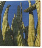 Organ Pipe Cactus Arizona Wood Print