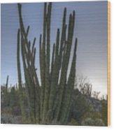 Organ Pipe Cactus At Sunset Wood Print