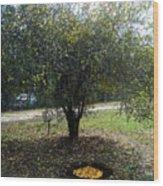 Organize Oranges Wood Print