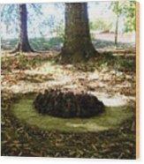 Organize Pinecones Wood Print