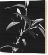 Oriental Lily Two Wood Print