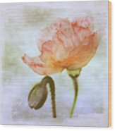 Oriental Poppy And Bud Wood Print