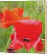 Oriental Poppy Flower Art Prints Poppies Red Baslee Troutman Wood Print